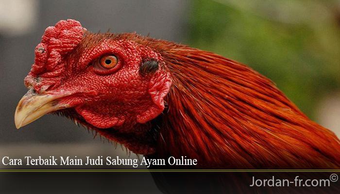 Cara Terbaik Main Judi Sabung Ayam Online