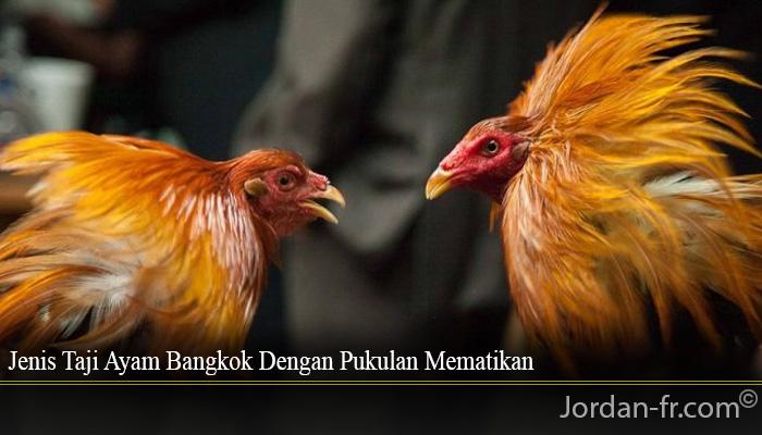 Jenis Taji Ayam Bangkok Dengan Pukulan Mematikan